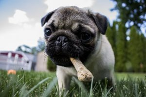Top 5 Best Long Lasting Dog Chews for Tough Chewers